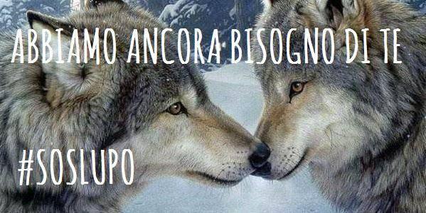 abbattimento lupi