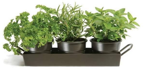 pappataci piante