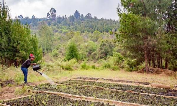 50 milioni di alberi tanzania1