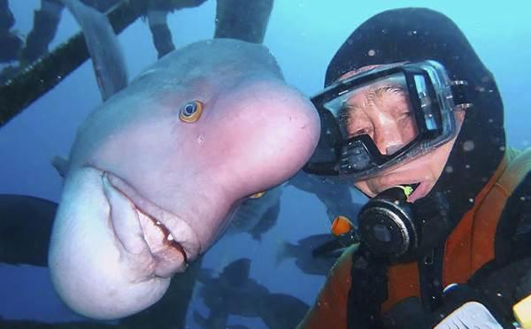 amicizia uomo pesce1