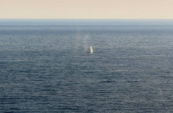 avvistamento balena 1