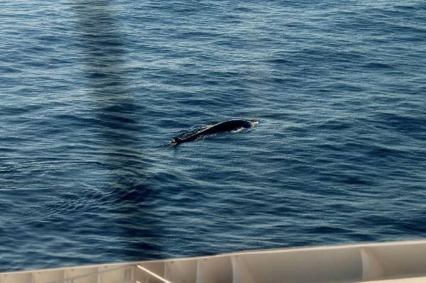 avvistamento balena 4