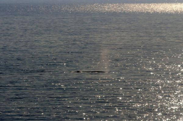 avvistamento balena 5