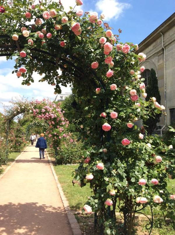 giardino delle piante parigi