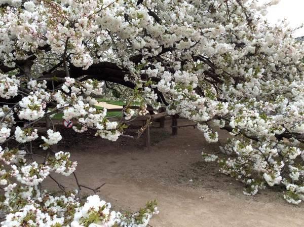 giardino delle piante parigi4