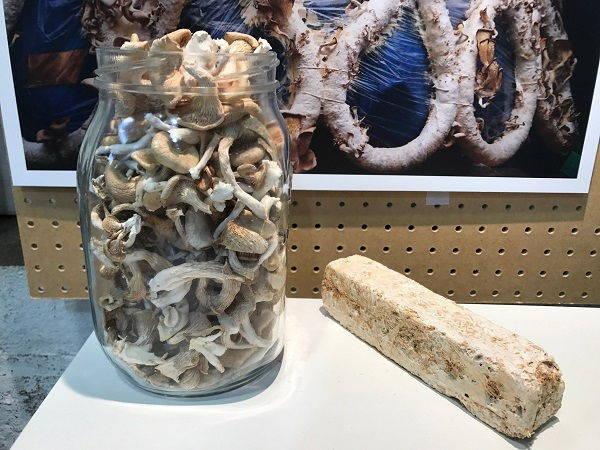 mushroom can