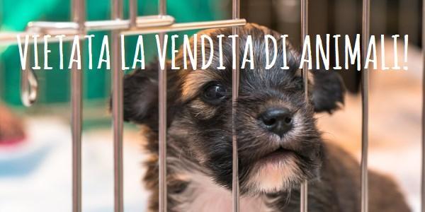 vietata-vendita-animali