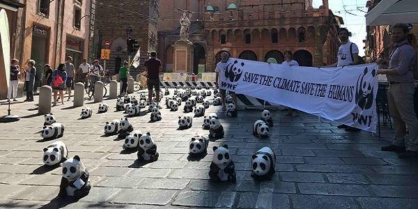 g7 bologna panda