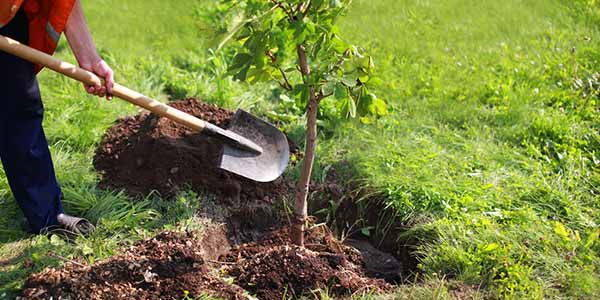 piantare-alberi