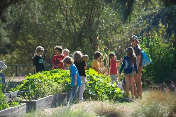 ristorante sostenibile a scuola2