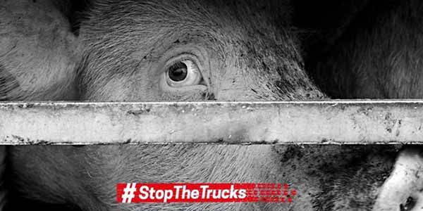 stop-the-trucks
