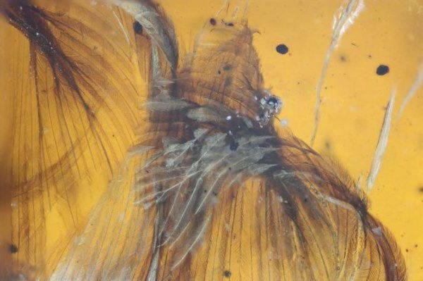 uccello ambra2