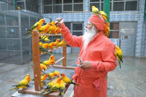uomo che salva uccelli4