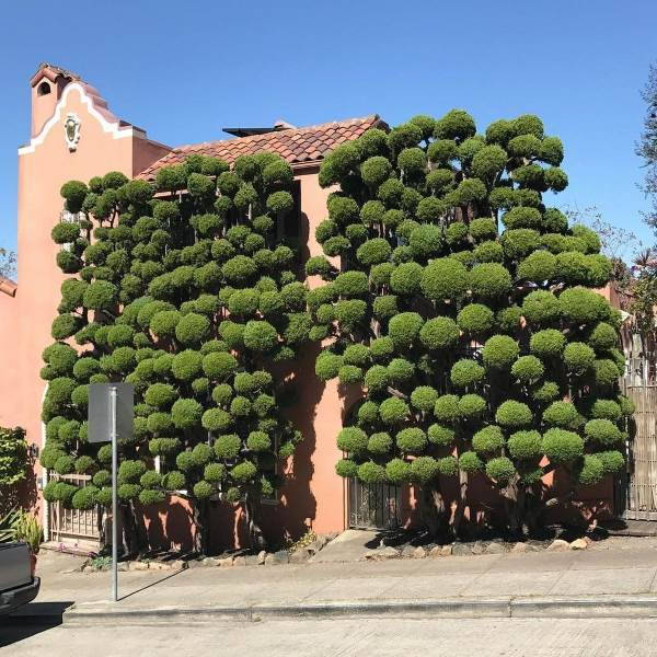 alberi san francisco