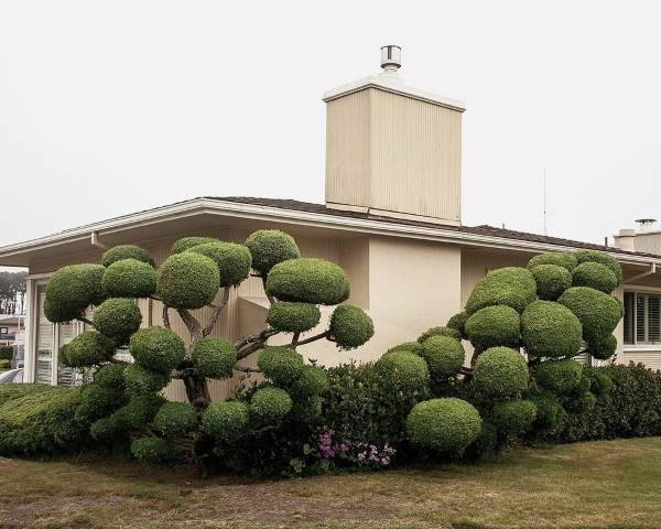 alberi san francisco1