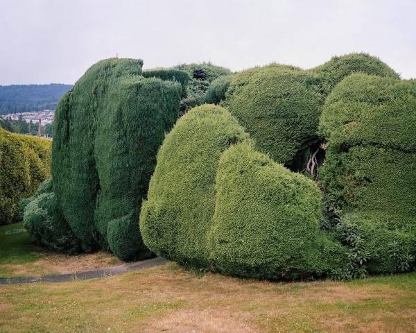alberi san francisco2
