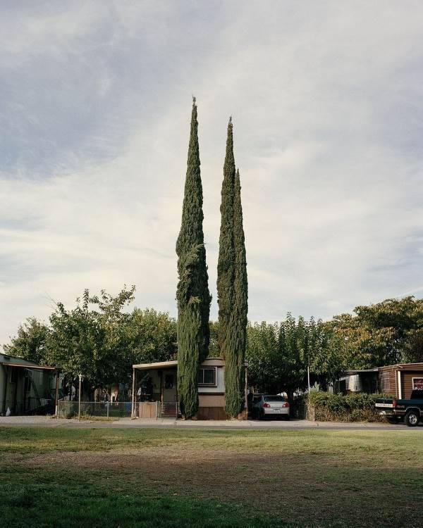 alberi san francisco4
