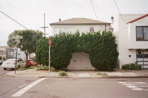 alberi san francisco8