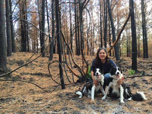 cani salvano foresta