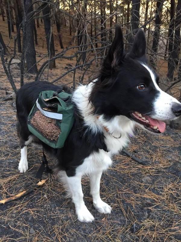 cani salvano foresta1