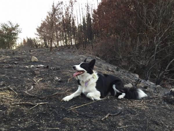 cani salvano foresta2