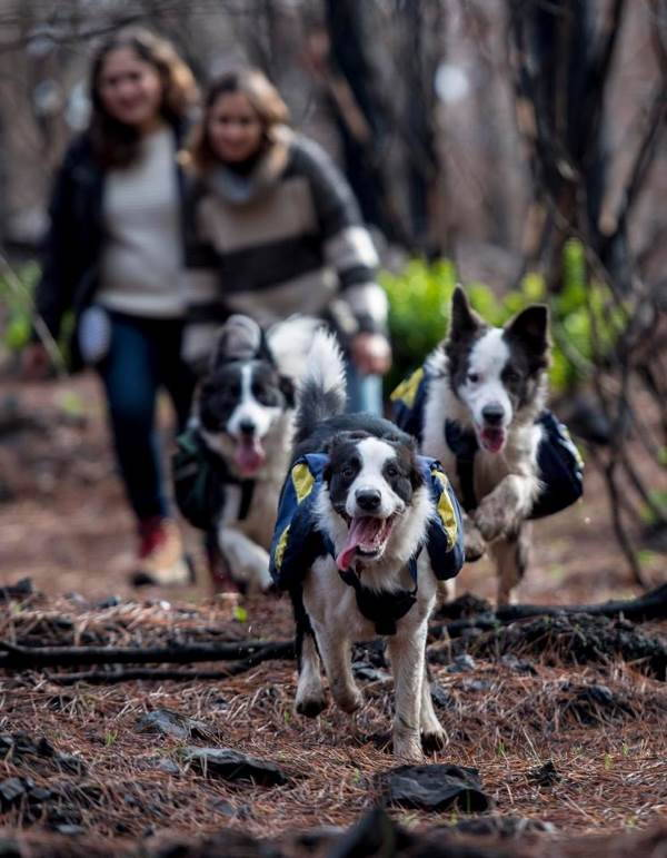 cani salvano foresta4