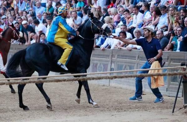 cavallo tornasol1