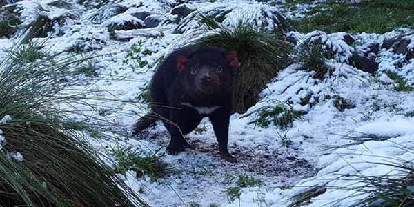 diavolo-tasmania-neve