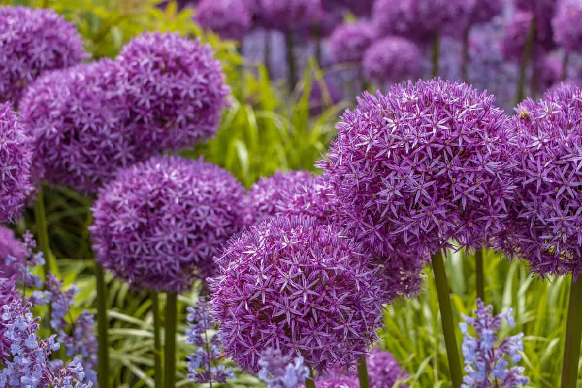 Fiori Che Amano Il Sole 12 piante che colorano il giardino e tengono lontani gli