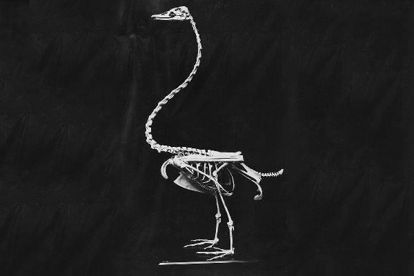 pouwa fossile
