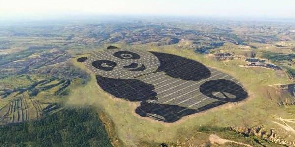 Solar Farm Panda