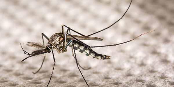 zanzare-google