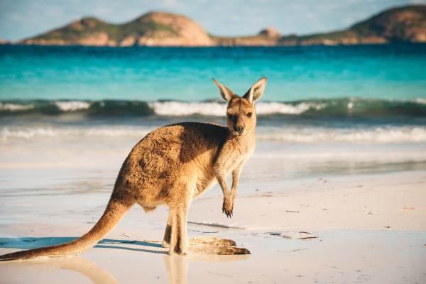 australia viaggiatori