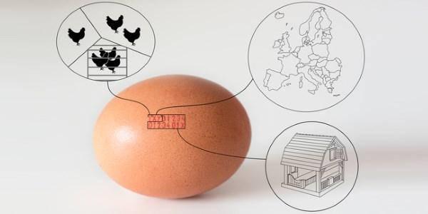 codice etichetta uova
