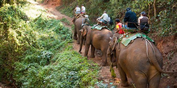 elefanti turismo