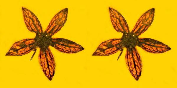 fiori ambra