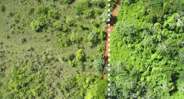 foresta scarti arance2
