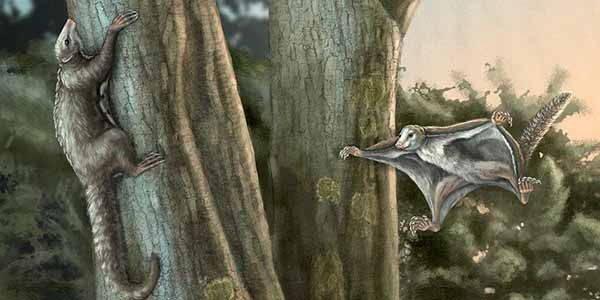 mammifero-preistoria