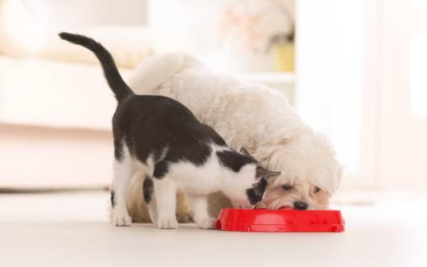 mangime cani gatti