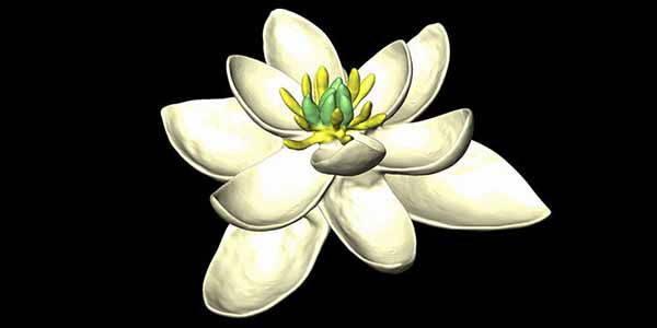 primo-fiore