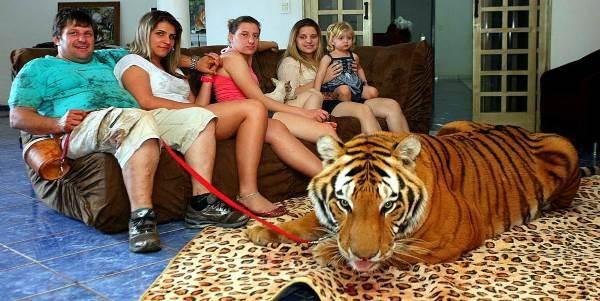 selfie_tigri
