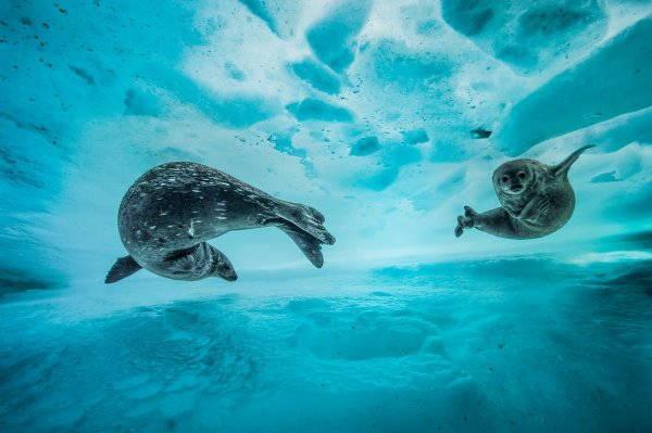1. foca