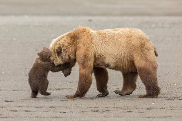 10. orso bruno