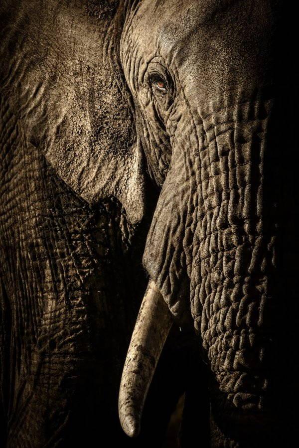 12. elefante