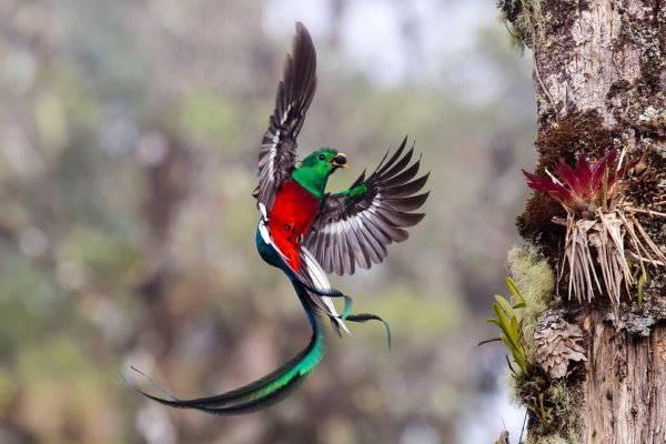 13.quetzal splendente