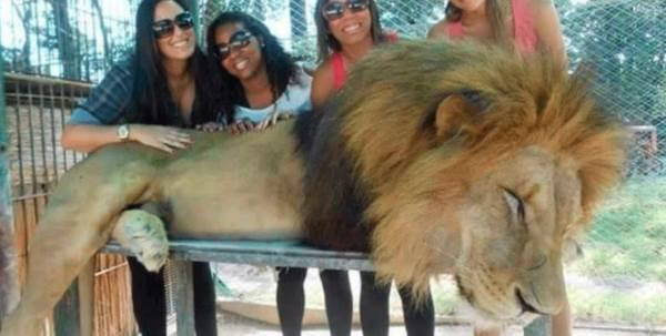 animali_drogati_zoo