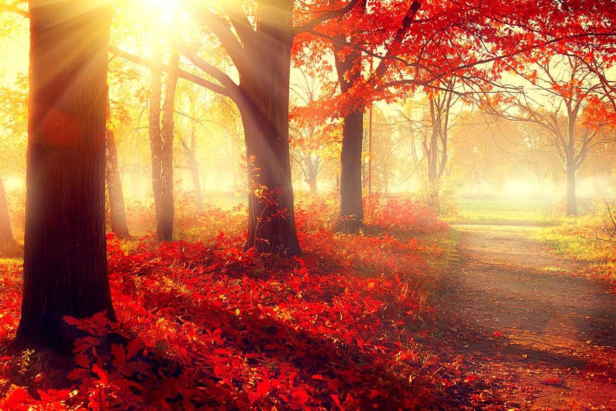 autunno bosco