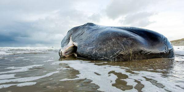 balene aurore boreali