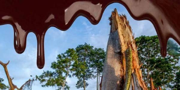 foreste cacao costa d'avorio
