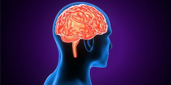 Cervello fame